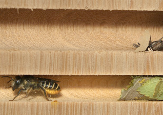 Next ArtSci salon March 12: Beeing Biodiverse & The Art of Spying on Wild Bees