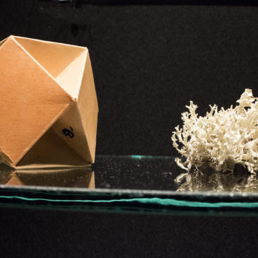 The Cabinet project artists talk. Nature: patterns, models, imitation , Friday, Apr 7